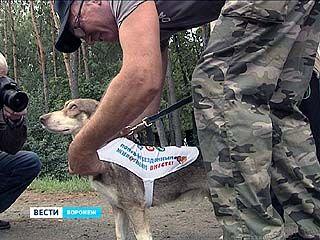 Воронежский защитник животных со своей собакой отправился пешком в Москву