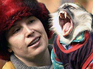Воронежской обезьяне нужен дантист