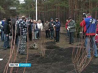 Воронежца обвиняют в хищении дорогостоящих деревьев