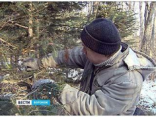 Воронежцы будут дежурить в дендрарии и в новогодний праздник
