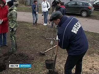 Воронежцы вышли на субботник