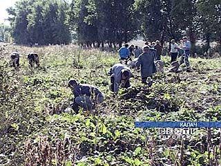 Воспитанники Калачеевского интерната сами обеспечивают себя овощами