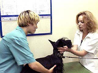 Всероссийская ветеринарная конференция пройдет в Воронеже