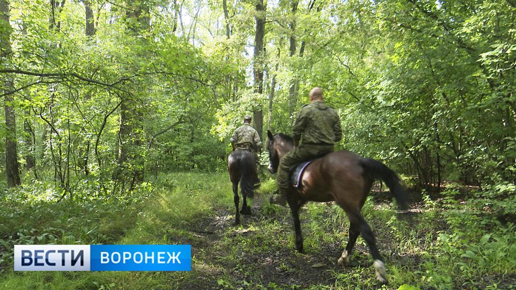 Патрули на лошадях и разведка с воздуха. Как усилили охрану Воронежского заповедника