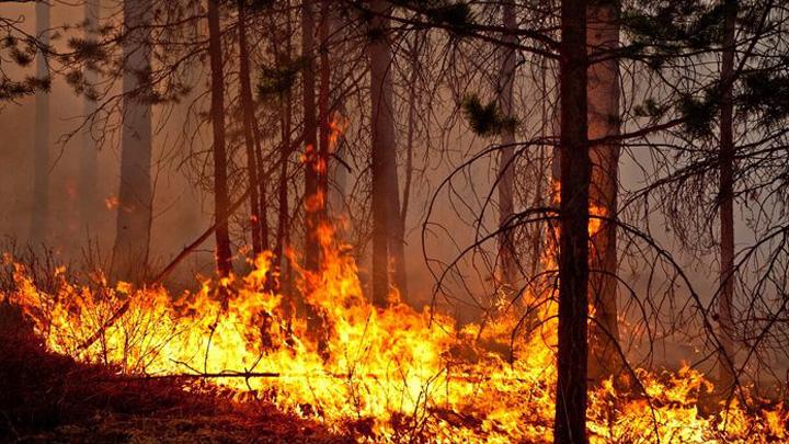 В трёх районах Воронежской области уровень пожарной опасности достиг пика