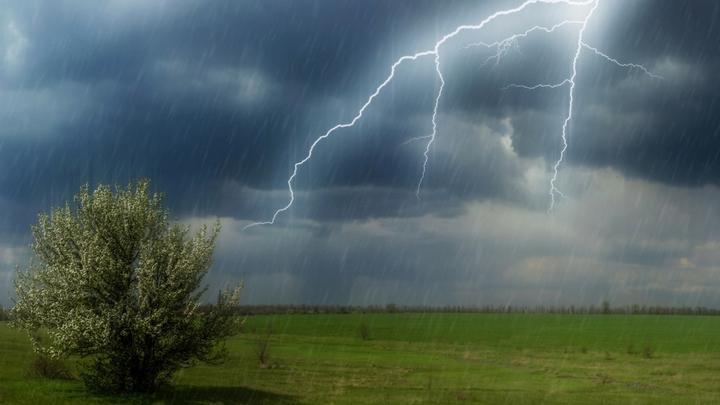 Спасатели предупредили о порывистом ветре и грозах в Воронежской области