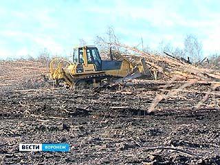 За 2 года удалось расчистить только половину сгоревших в 2010-м лесов