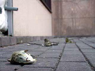 За исполнение человеческих желаний расплачиваются птицы