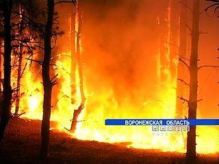 За первую неделю сентября в области произошло 340 природных пожаров