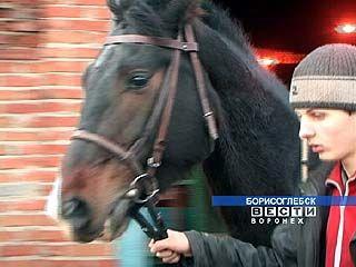 Завершился чемпионат России по конному спорту