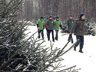 """""""Зеленый патруль"""" защищает елки от несанкционированной рубки"""