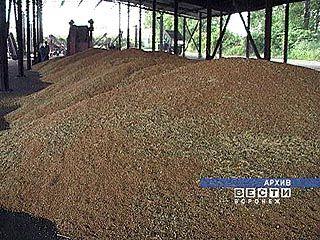 Зерна уродилось больше, чем ожидалось, тем не менее, цены на муку ползут вверх