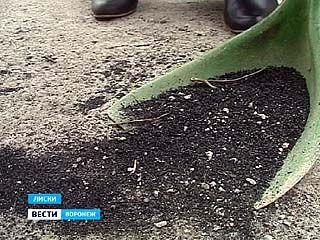 Жители Лисок рано утром обнаружили, что земля покрыта слоем золы