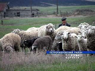 Жители Петропавловского района взяли животноводство в свои руки