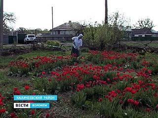 Жительница села Ширяево Калачеевского района поздравляет всех с праздником Победы