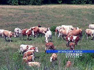 Животноводство не приносит выгоду Эртильскому району