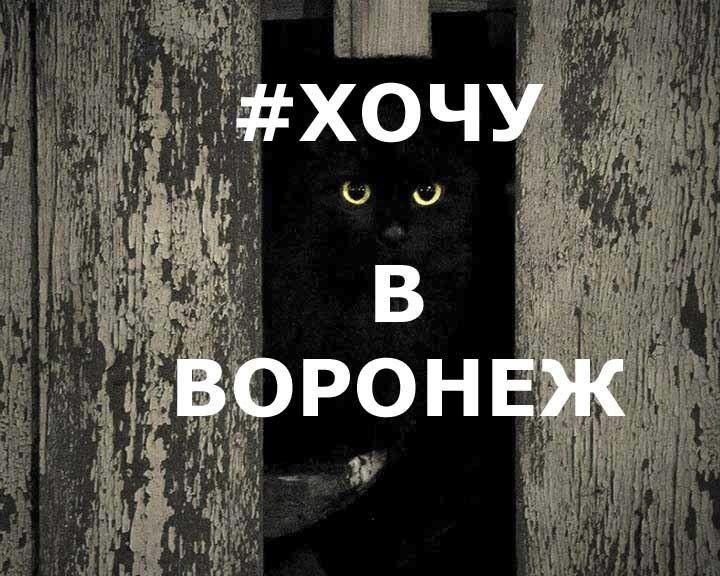 ФОТО: 20 воронежских котов, некоторые – прямиком из любимых книг