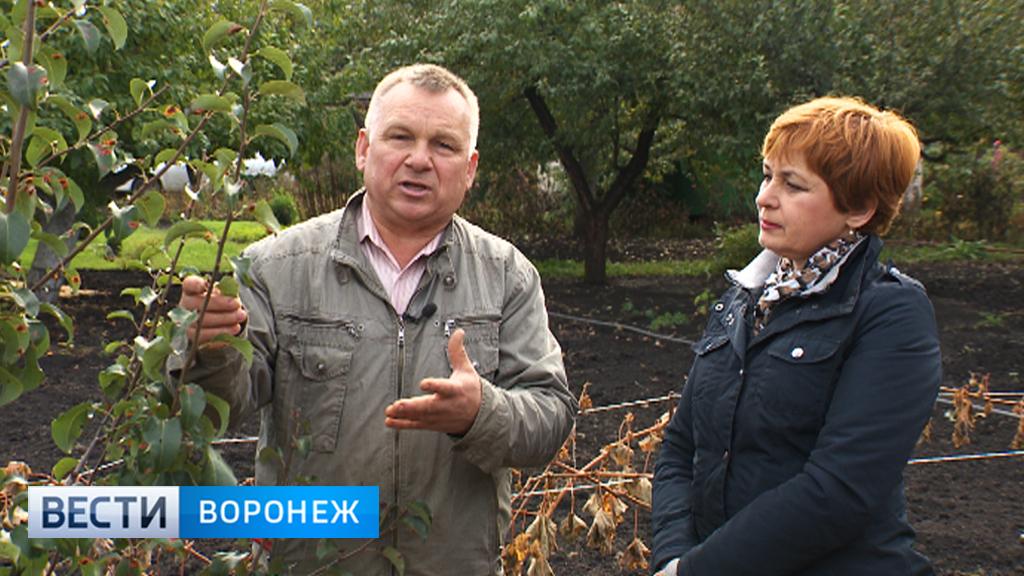 Агроном Иван Бабин рассказал, почему осенью долго не опадают листья с деревьев