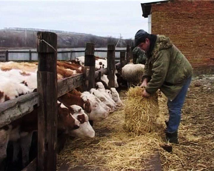 Воронежским фермерам безвозмездно предоставят землю