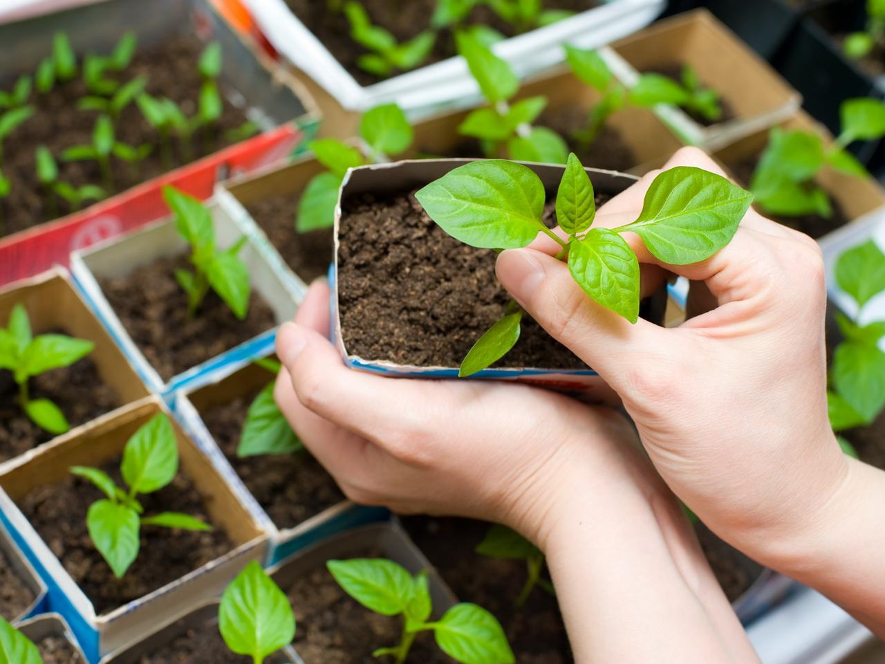 Поздняя весна: воронежский агроном рассказал, как спасти рассаду