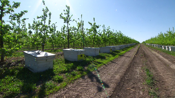 Садоводов Воронежской области поддержат деньгами