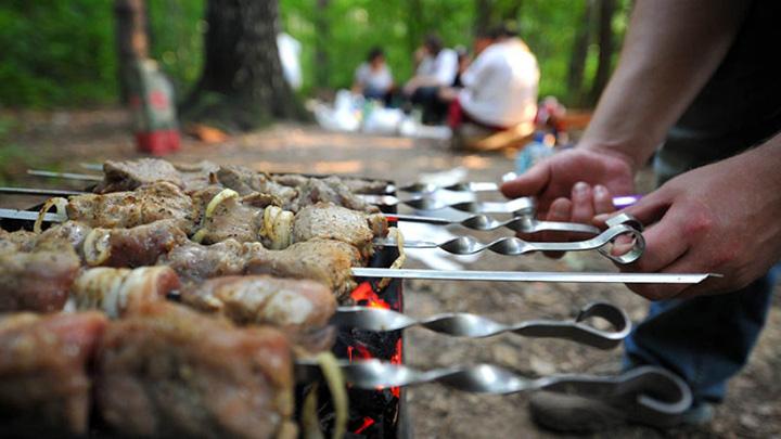 Как в этом году будут защищать воронежские леса от любителей шашлыков на природе