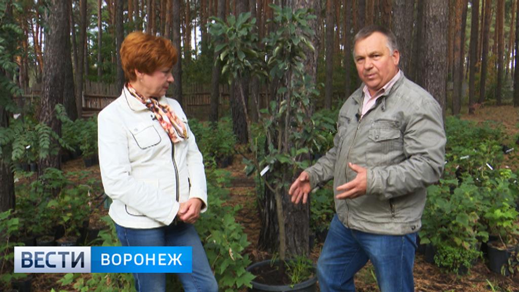 Сажаем кустарники правильно вместе с агрономом Иваном Бабиным