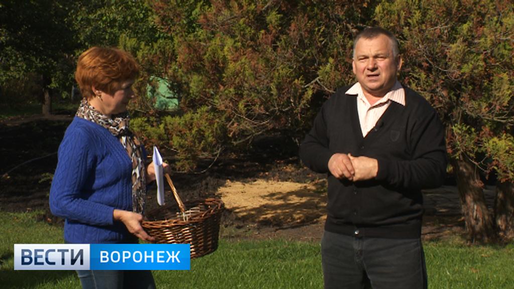 Воронежский агроном Иван Бабин раскрыл простые секреты создания газона