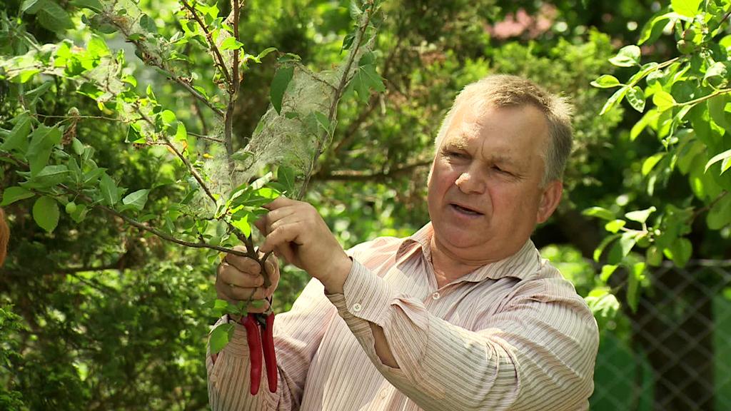 Воронежский агроном рассказал, как бороться с горностаевой молью