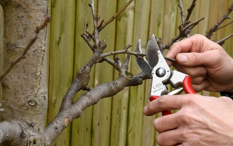 Воронежский агроном рассказал о правильной обрезке деревьев