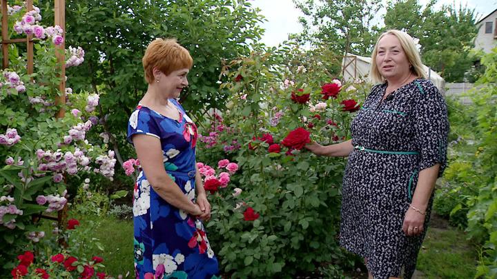 Преподаватель из Воронежской области рассказала историю создания своего розария