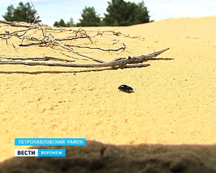 Новые и хорошо забытые старые места отдыха Воронежской области