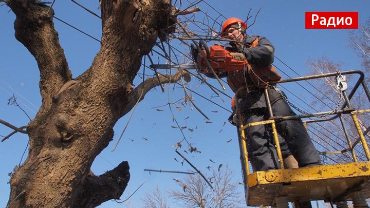Кто обязан выполнять санитарную вырубку деревьев во дворах