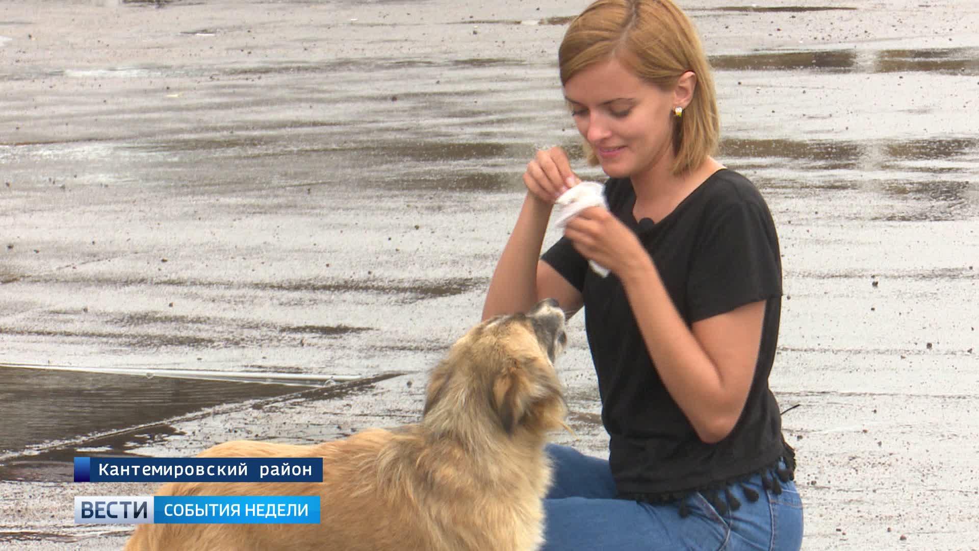 События недели: объезд пробки в Лосево, строительство собачьего приюта в Воронеже и заблудившийся болельщик