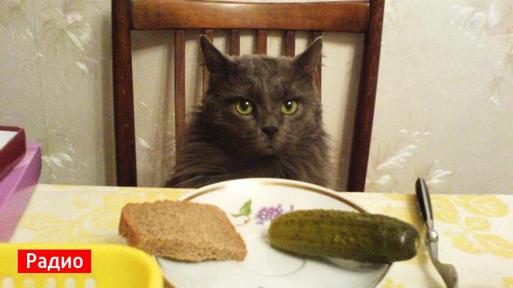 Воронежские филологи рассказали, откуда пошло выражение «кормить завтраками»