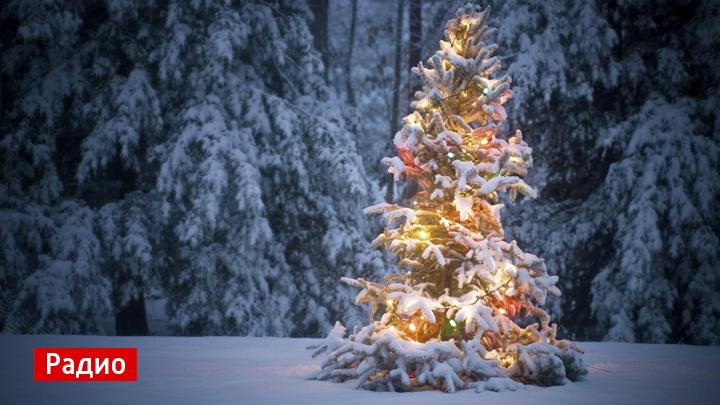 Самая популярная в СССР новогодняя песня: «В лесу родилась ёлочка»