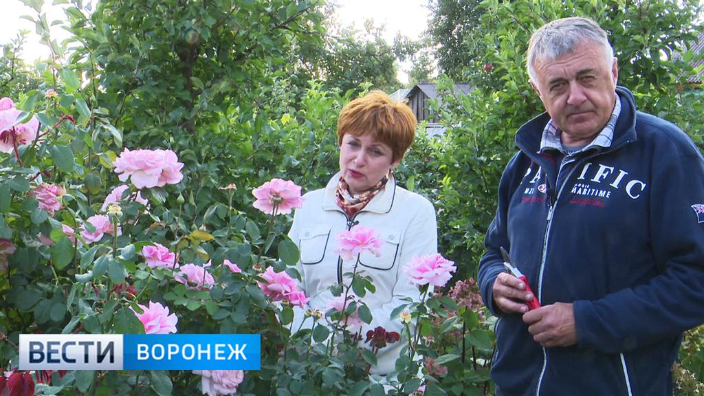 Интересные факты о розах от воронежского фермера Александра Продана