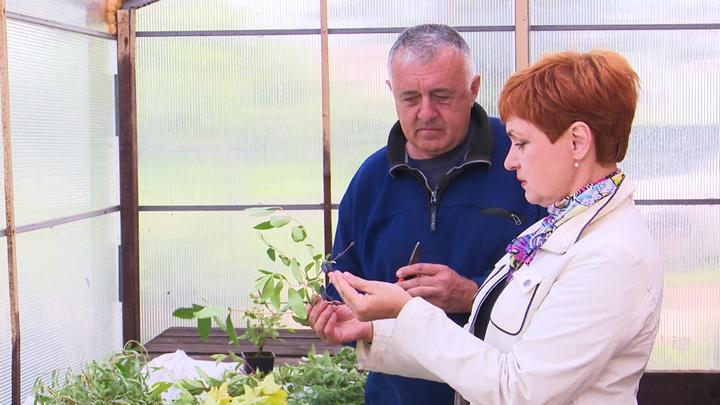 Дела садовые. Всё о традиционных способах размножения растений