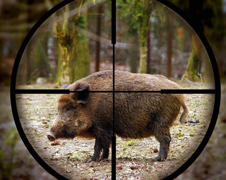 Из-за АЧС вВоронежской области запретили любительскую испортивную охоту