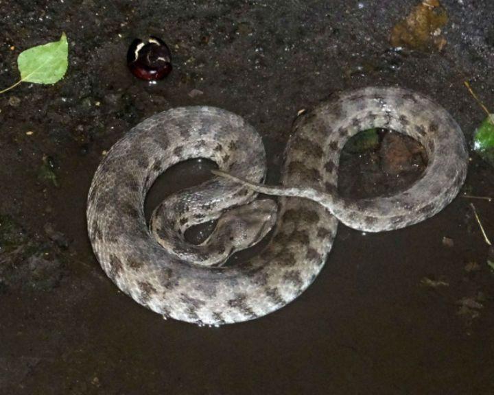 ВВоронеже около подъезда дома словили змею