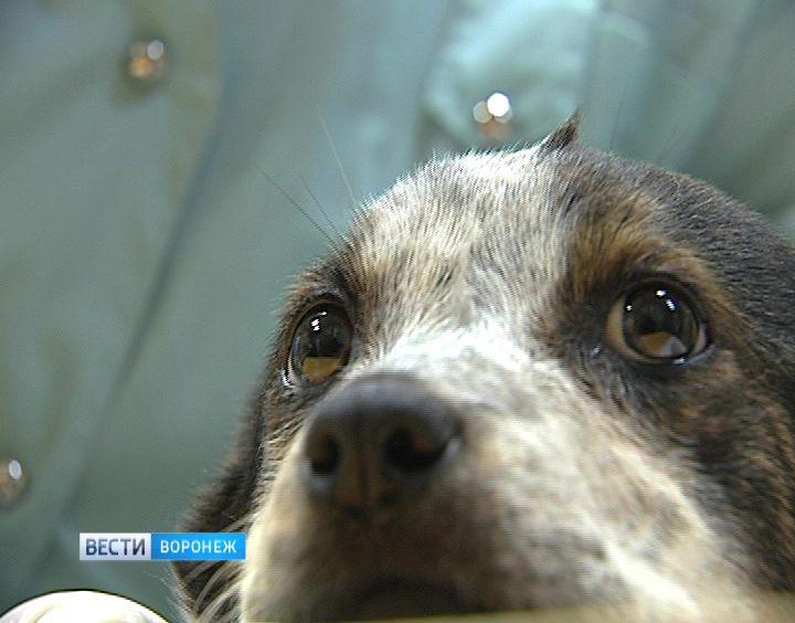 Воронежские экологии подключились кпоискам убийц бездомной собаки вТепличном