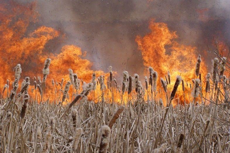ВВоронежской области произошел 1-ый в2015 году ландшафтный пожар