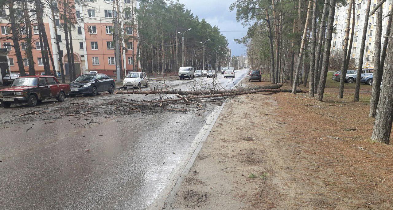 НаКалиниградской вВоронеже дерево упало напроезжую часть