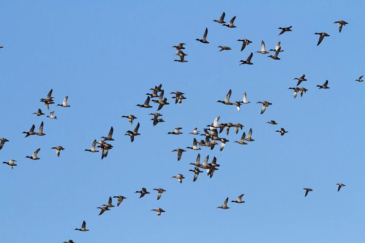 Прежде срока: ВВоронежскую область вспешке возвращаются перелетные птицы