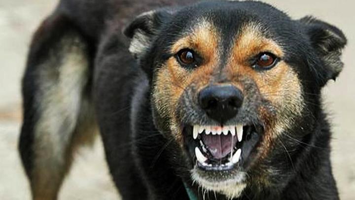 ВЛипецкой области зарегистрировано 10 случаев бешенства