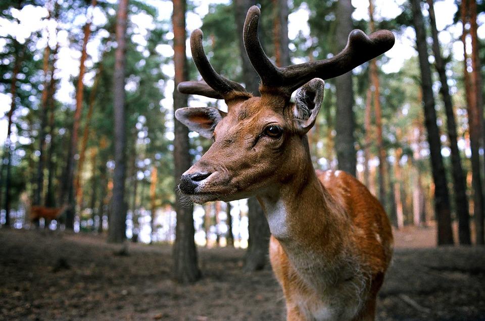 1495629061 С1июня вКировской области откроют сезон охоты накабана