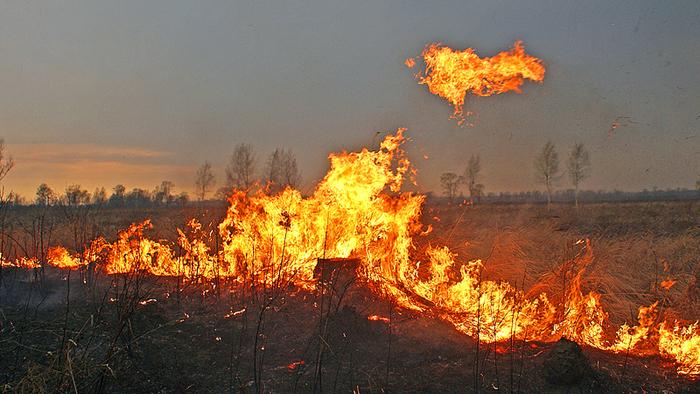 ВВоронежской области мужчина, защищаясь отгадюк, едва несжег целое село