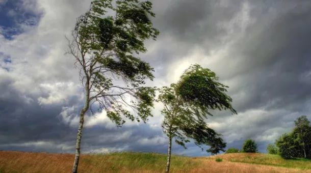 30июня вВоронеже предполагается штормовой ветер— МЧС