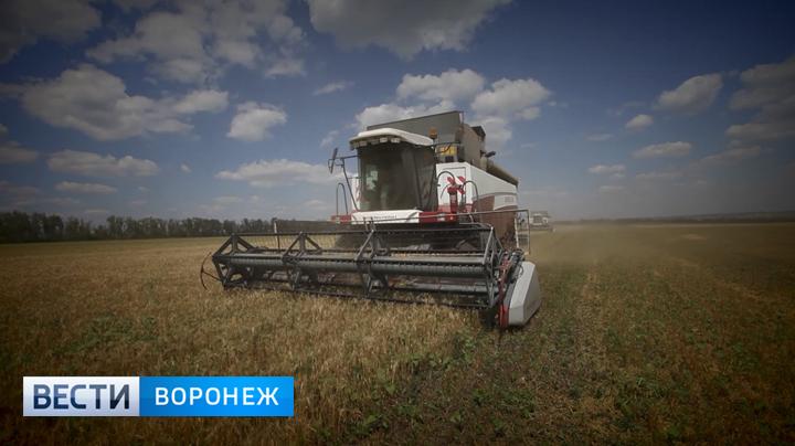 Урожайные рекорды: свыше 4 млн тонн зерна собрано вВоронежской области