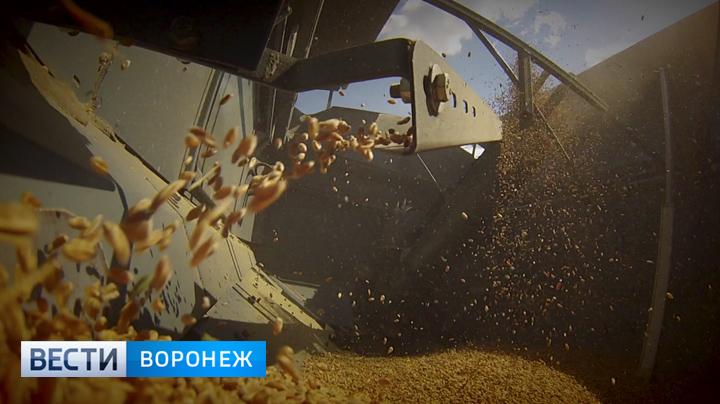 Воронежские аграрии установили рекорд посбору зерна